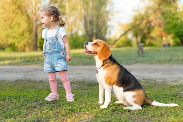Kleines kaukasisches mädchen geht mit ihrem hund im sommer im park auf der natur. beagle züchten Premium Fotos