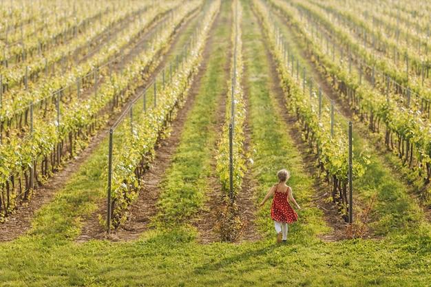 Kleines kind im roten kleid läuft in weinberg Kostenlose Fotos