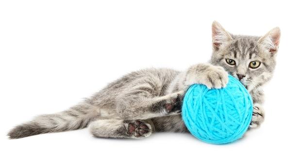 Kleines lustiges kätzchen und fadenschlaufe. auf weißem hintergrund isoliert Premium Fotos