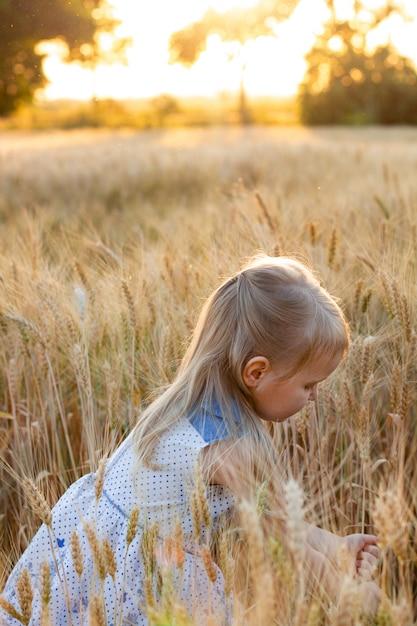Kleines nettes blondes mädchen im blauen kleid auf dem weizengebiet bei sonnenuntergang zerreißt ährchen des weizens Premium Fotos