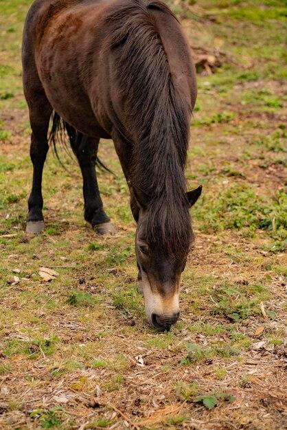 Kleines pferd auf dem bauernhof Premium Fotos