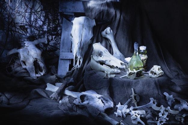 Knochen und schädel von tieren. halloween Premium Fotos