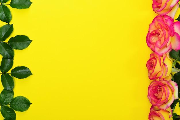 Knospen von gelben rosa rosen und von grünblättern Premium Fotos