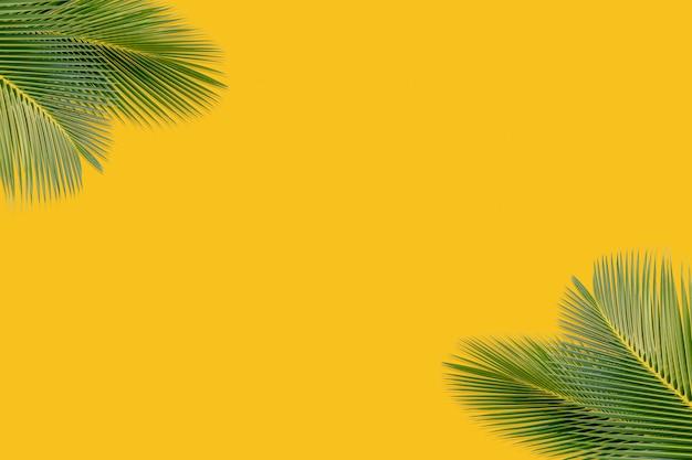 Kokosnuss verlässt auf einem gelben hintergrund, um produkte zu zeigen Premium Fotos