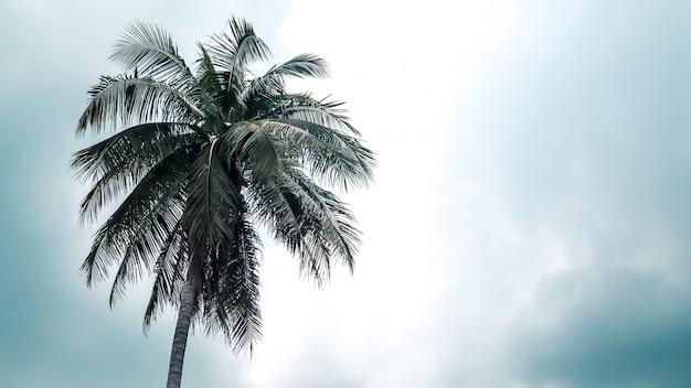 Kokosnussbaum allein in den himmel stehen Premium Fotos