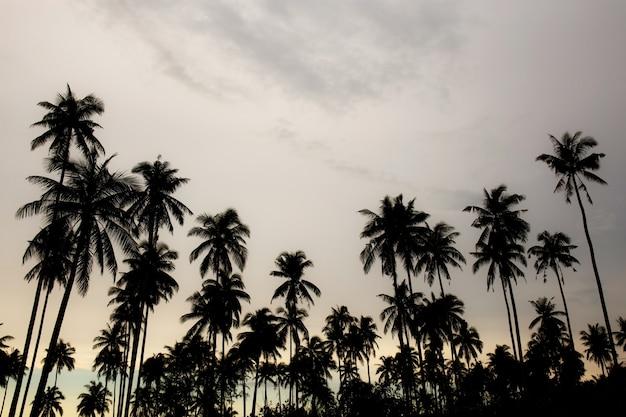 Kokosnussbaum mit schattenbild. Premium Fotos