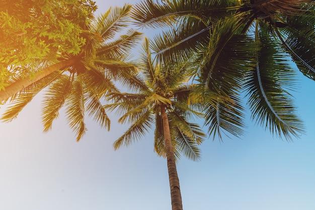 Kokosnusspalme an der tropischen küste im inselstrand mit weinleseton. Premium Fotos