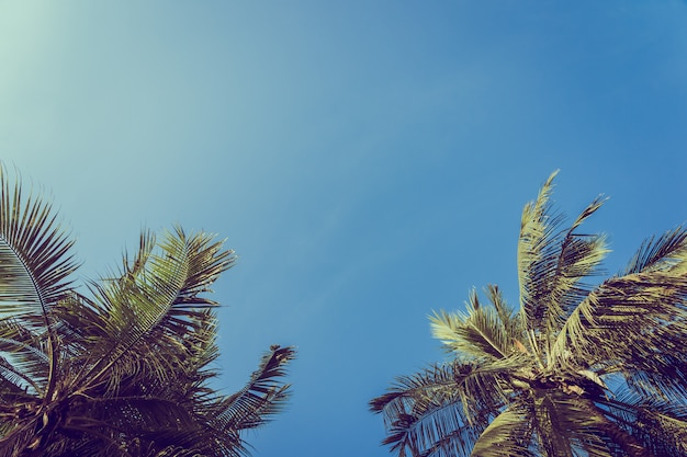 Kokosnusspalme des niedrigen winkels mit hintergrund des blauen himmels Kostenlose Fotos