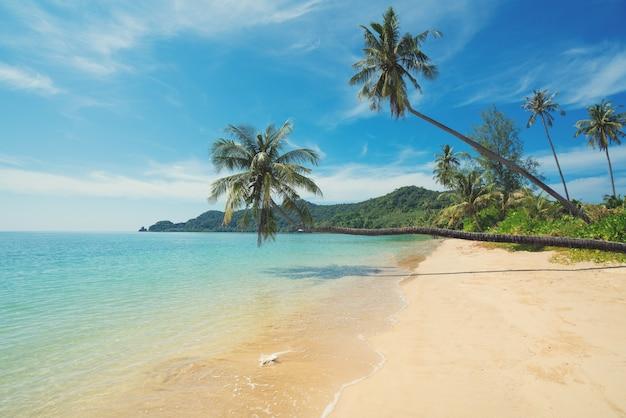 Kokosnusspalme über sommerstrandmeer in phuket, thailand. Premium Fotos