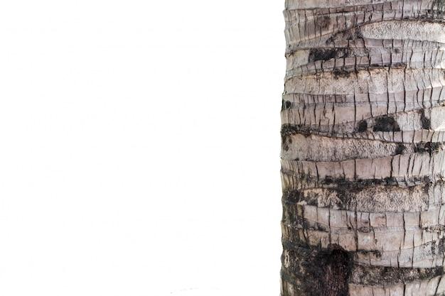 Kokosnussstamm auf weißem hintergrund Premium Fotos