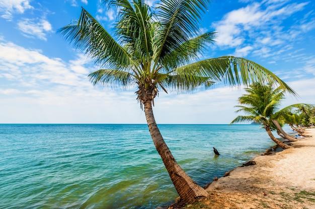 Kokospalmen an einem tropischen strand Premium Fotos