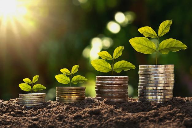 Konzeptfinanzierung und buchhaltung wachsen. jungpflanze auf münzen mit sonnenaufgang Premium Fotos