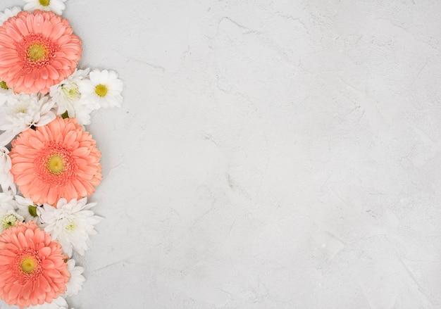 Kopieren sie raumhintergrund mit gänseblümchen und gerberablumen Kostenlose Fotos