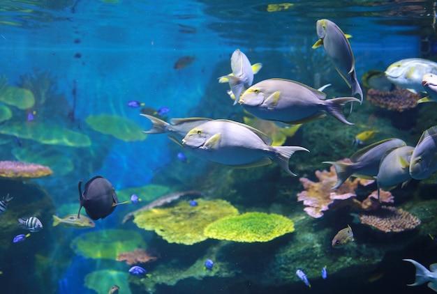 Koralle und fische im aquariumbecken Premium Fotos