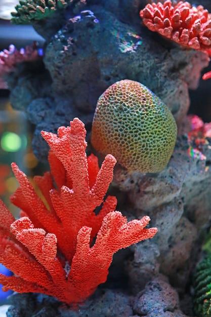 Korallen im aquariumbecken Premium Fotos