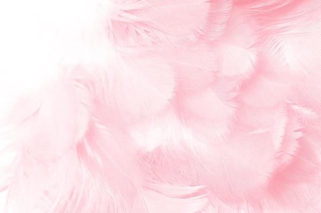 Korallenroter rosa federbeschaffenheitshintergrund Premium Fotos