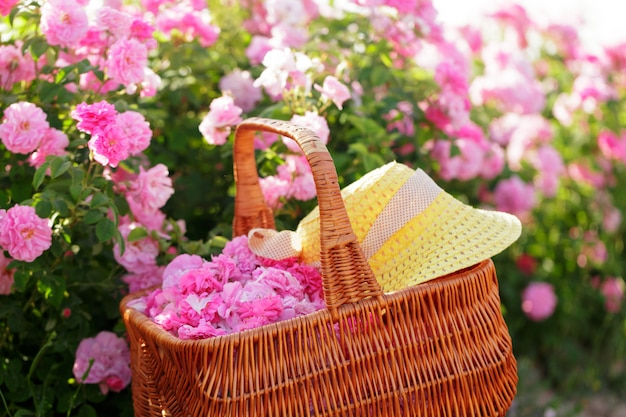 Korb mit blume aus rosa ölrosen. Premium Fotos