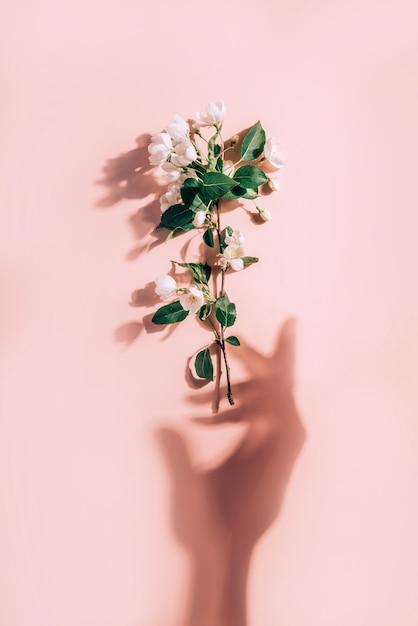 Kreatives frühlingskonzept mit zweig des blühenden apfelbaums und der sonnenschatten in der form einer frauenhand Premium Fotos