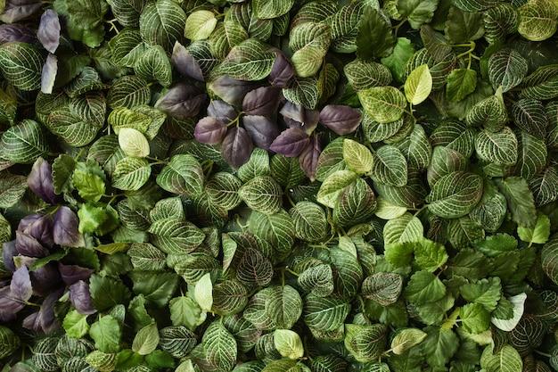Kreatives layout aus grünen blättern. flach legen. natur-konzept Kostenlose Fotos