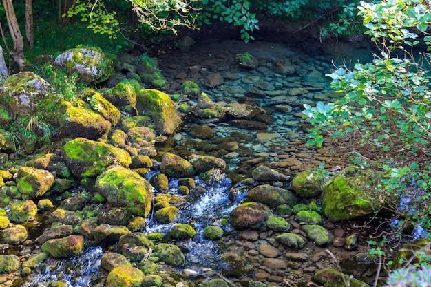 Kristallklares wasser des gebirgsflusses, der vom tauwetter kommt. nationalpark der picos de europa (kantabrien, asturien, castilla y leon - spanien). privates forellen- und lachsfangrevier. Premium Fotos