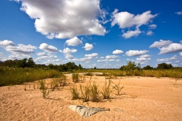 Kruger parklandschaft Kostenlose Fotos