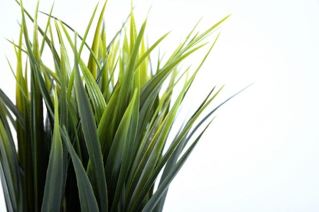 Künstliche blumen gras andere form in einem topf isoliert Premium Fotos