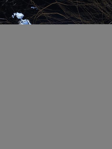 Kürbis 3d gegen eine gespenstische halloween-landschaft Kostenlose Fotos