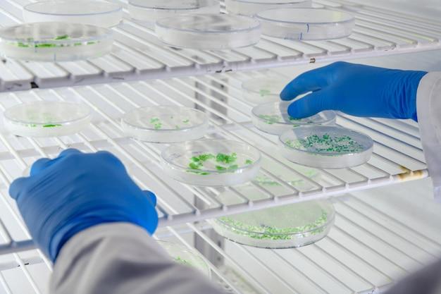 Laborant, der eine substanz auf petrischalen untersucht, während er coronavirus-forschung betreibt Kostenlose Fotos