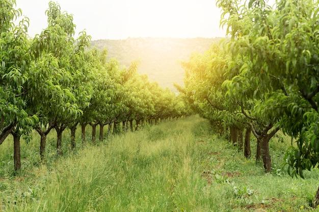 Ländliche landschaft mit bäumen Premium Fotos
