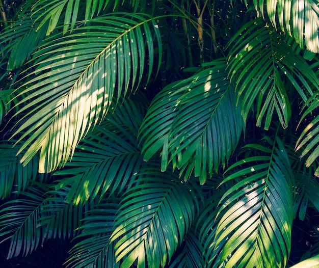 Lässt bunte blume der abstrakten tropischen blätter der palme auf dunkler tropischer laubnatur Premium Fotos