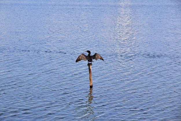 Lagune rodrigo de freitas in rio de janeiro, brasilien Premium Fotos