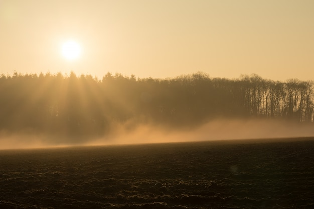 Landlandschaft morgens im nebel Premium Fotos