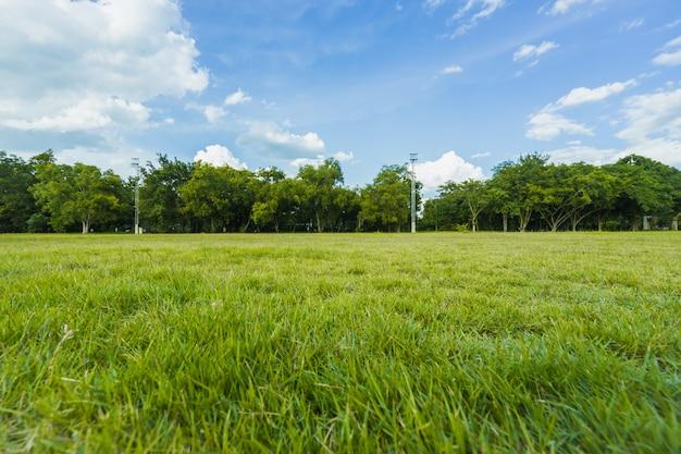 Landschaft der rasenfläche und der öffentlichen parknutzung der grünen umwelt als natürlicher hintergrund, Premium Fotos