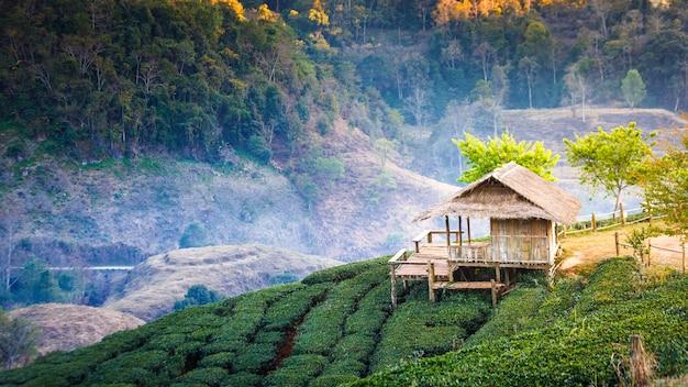 Landschaft des teeplantagenfeldes auf berg Premium Fotos