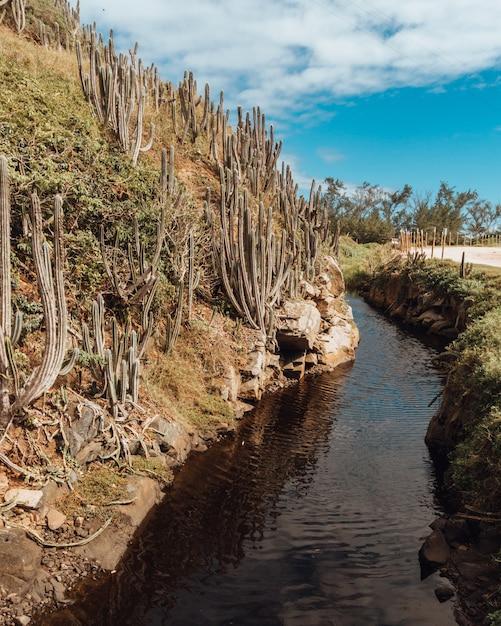 Landschaft eines flusses in rio de janeiro mit einer sandstraße und kakteen auf einem hügel Kostenlose Fotos