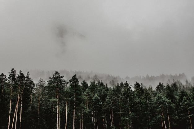 Landschaft eines waldes bedeckt im nebel Kostenlose Fotos