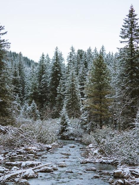 Landschaft eines waldes mit vielen mit schnee bedeckten tannenbäumen in der tatra, polen Kostenlose Fotos