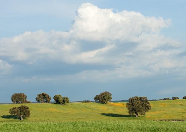 Landschaft mit einigen bäumen und einem schönen himmel Premium Fotos