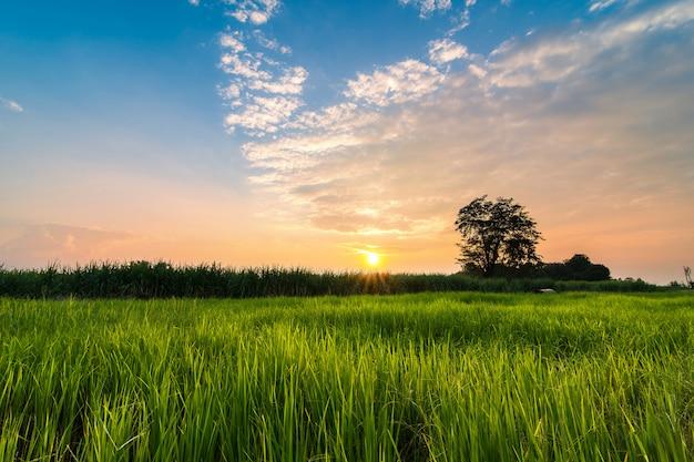 Landschaft sonnenuntergang feld Premium Fotos