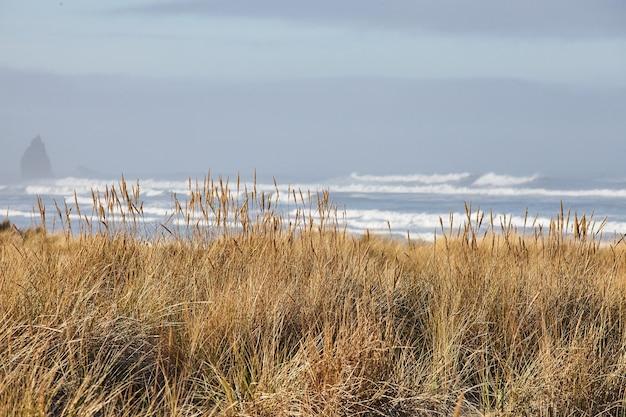 Landschaft von strandgras am morgen am cannon beach, oregon Kostenlose Fotos