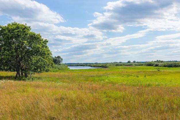 Landschaft wilde wiese, feld mit blumen unter dem blauen himmel. Premium Fotos