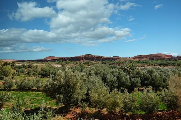 Landschaftsansicht des bearbeitungsfeldes in der oase Premium Fotos