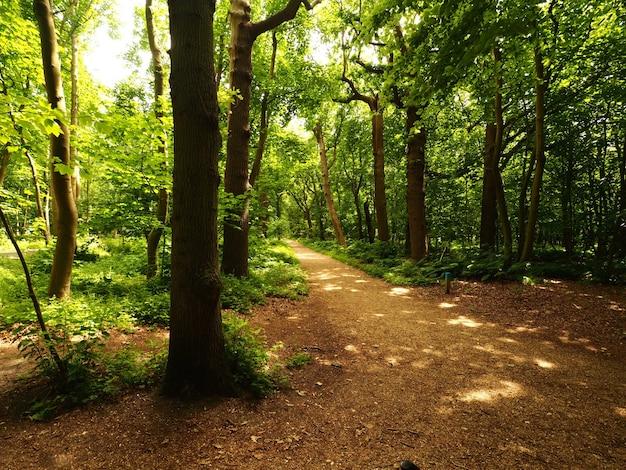 Landschaftsaufnahme von schmalen pfadlinienbäumen während des tages Kostenlose Fotos