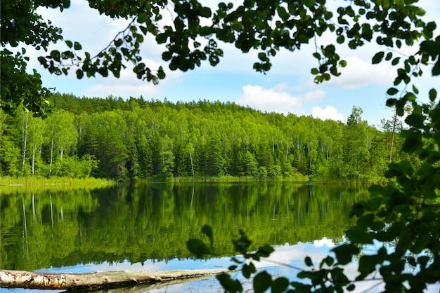 Landschaftsblauer see im sommerwald Premium Fotos