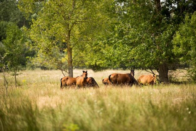 Landschaftsfoto von wilden pferden in letea forest Premium Fotos