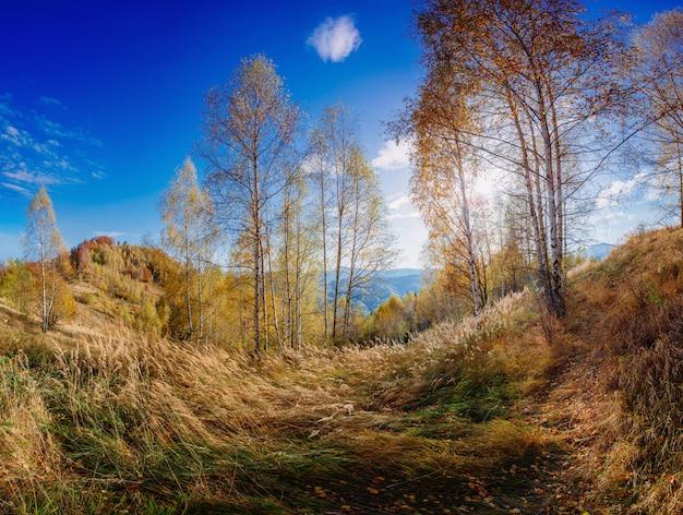 Landschaftsherbstpark Premium Fotos