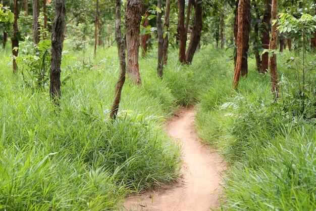 Landstraße mit bäumen des tropischen waldes. Premium Fotos