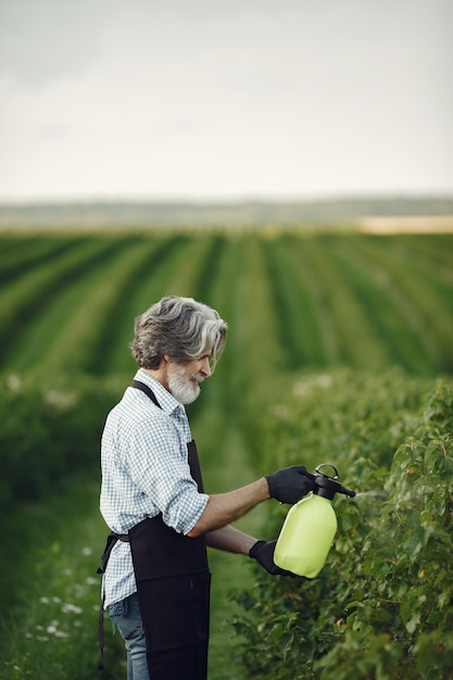 Landwirt besprüht gemüse im garten mit herbiziden. mann in einer schwarzen schürze. Kostenlose Fotos
