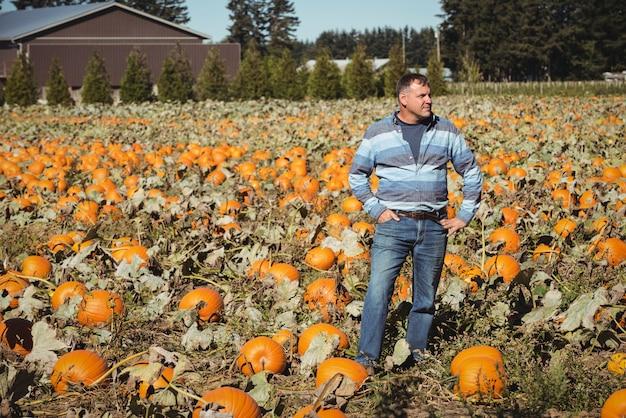 Landwirt, der auf dem kürbisgebiet steht Kostenlose Fotos