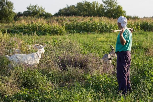 Landwirt, der die ziegen mit gras einzieht Kostenlose Fotos